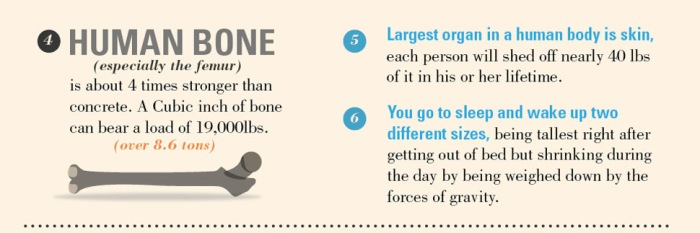 10 Amazing, Fun & Interesting Facts About Bones