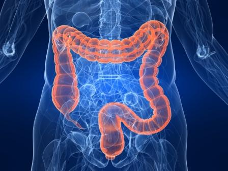 10 Interesting Facts About Intestines Whatthafact