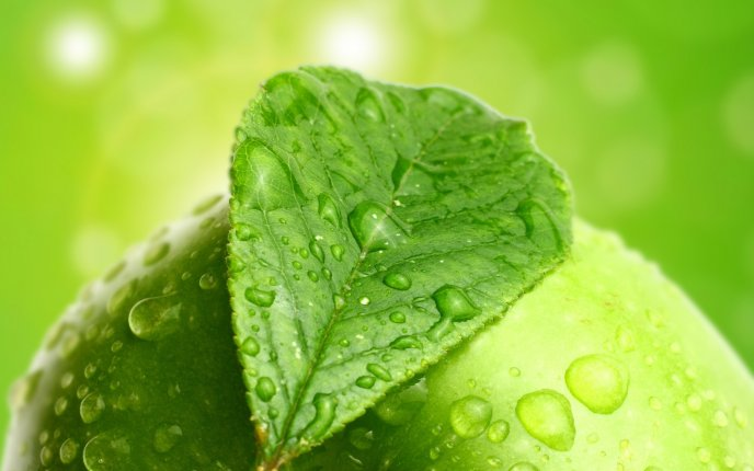 Nature's Green Beautiful Leaves Photo