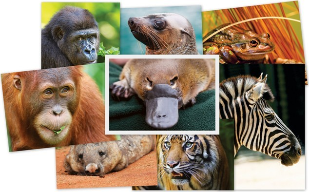 Beautiful Animals Collage