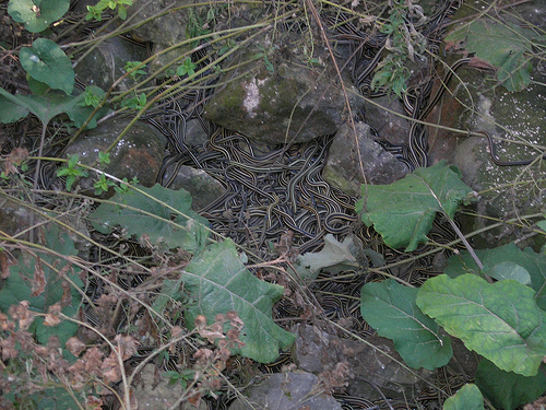 Narcisse Snake Dens photo