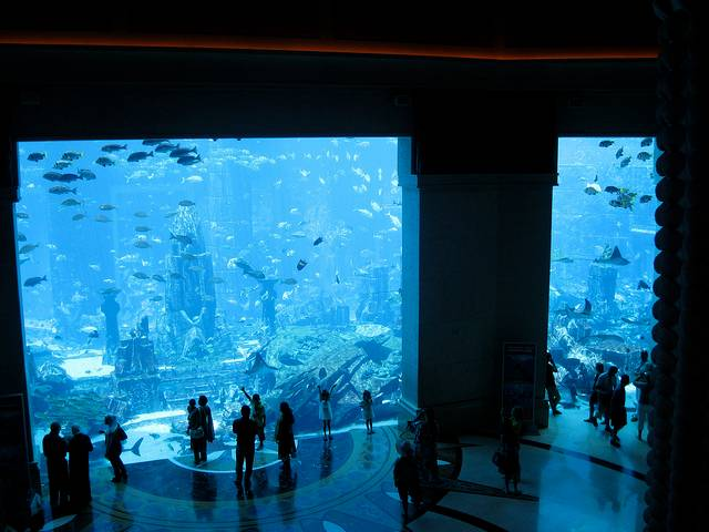 Atlantis Aquarium, Dubai
